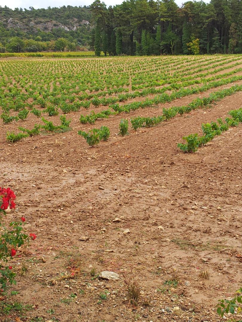Plantier-Rians -2011-10-25.jpg