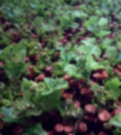 Plants en chambre chaude 2018