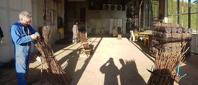 L'équipe des pépinières Tourette trie les bois des porte-greffes