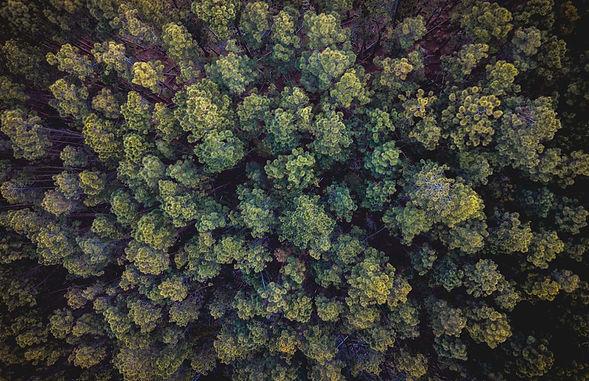 Trees_edited2.jpg
