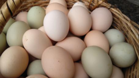Huevos de Campo cubeta 30