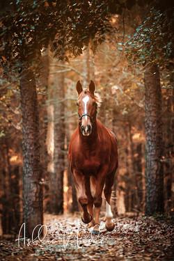 Horses & Pets
