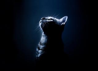 Achando o gato preto no escuro: Constelações Quânticas