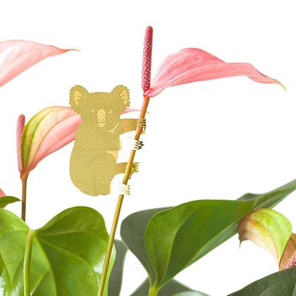 Décoration de plante Koala