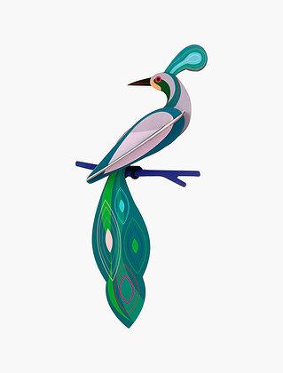Oiseau 3D à construire - Oiseau Fidji