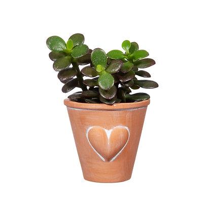 Petit Pot Coeur