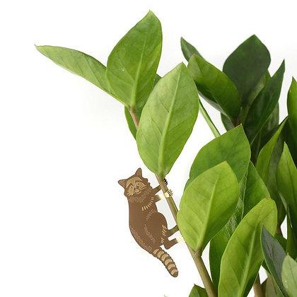 Décoration de plante Raton Laveur