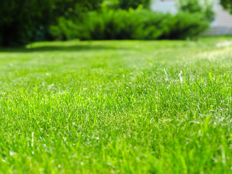 How to Re-Sow Your Lawn