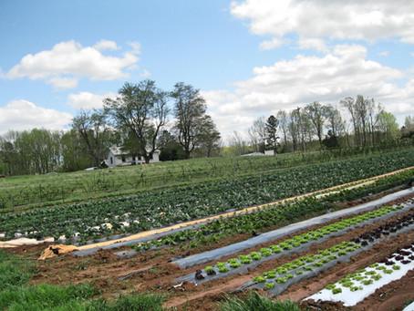 April Farm Update