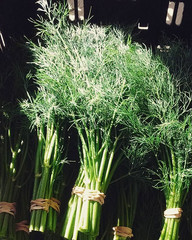 Dill Bunches