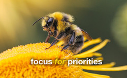 bisarto_focus_for_priorities3