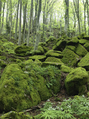 Bos-van-La-Verna-3.jpg