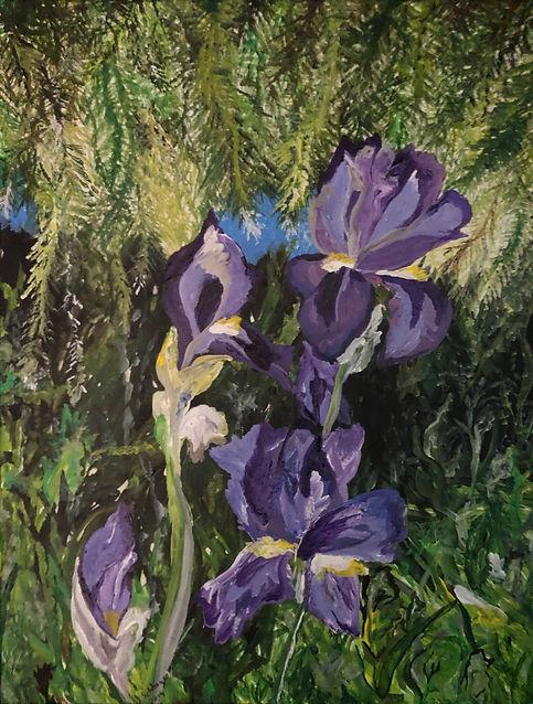 Schlage Iris in the Pines.jpg