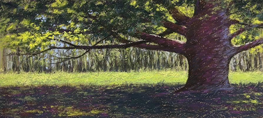 Allen, Sunlit Arboretum.jpg