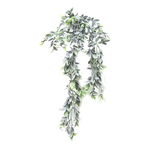 עציץ נשפך אוליב ירוק