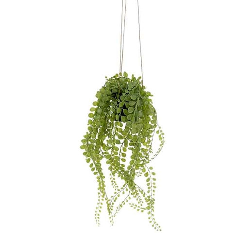 עציץ נשפך בלס פרש ירוק
