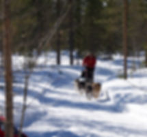 person on a huskey ride