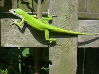 Lizard Shower
