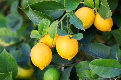 Frutales de nuestra tierra