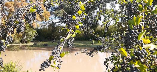 Rivera del río Toro Delta Tigre en el Refugio