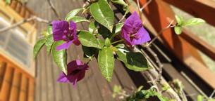 Santa Rita, flores del Delta