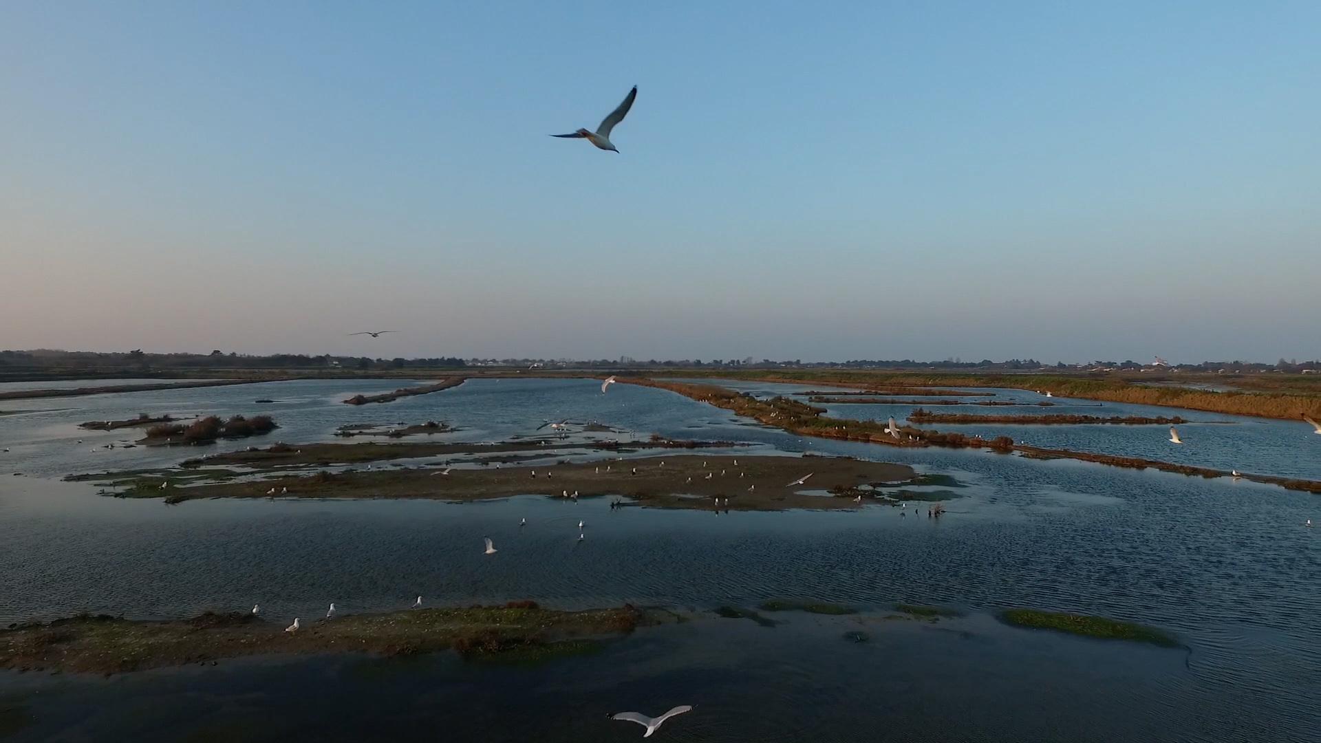 Site_Oiseaux_Drone_002