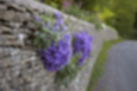 dry-stone-wall-purple-flowers-britt-will