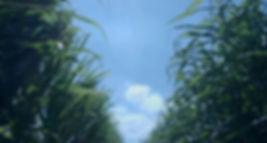 sugarcanefiber.jp sugarcanefiber-straw-i