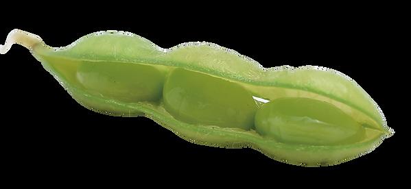 当農場の枝豆は粒の大きさ、食べ応え、食味にこだわった本来の甘みを引き立たせた枝豆です。 また、「まるで今茹でたようだ」と評価されるほどの鮮度を保っております。