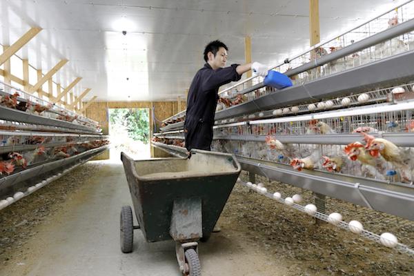 養鶏場の様子