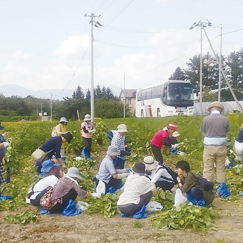 収穫1.jpg