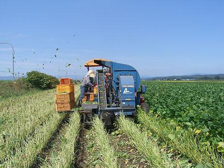 北海道十勝の雄大な土地で環境にも人にもやさしい枝豆を生産しております。 安心・安全にこだわり、枝豆について北海道十勝で一番最初に「イエス!クリーン」の称号を受けました。 子供たちが莢をしゃぶるように食べてもいいように、着莢後は農薬散布を一切行っておりません。  - 北海道十勝 - 枝豆 - イエスクリーン - EDAMAMY - 産地直送 - 枝豆通販 - 村瀬農場
