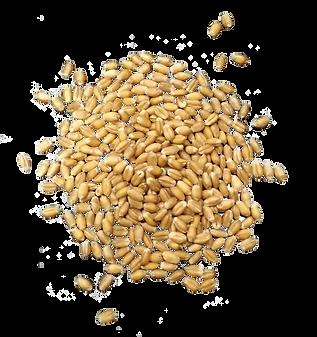 小麦粒2.png