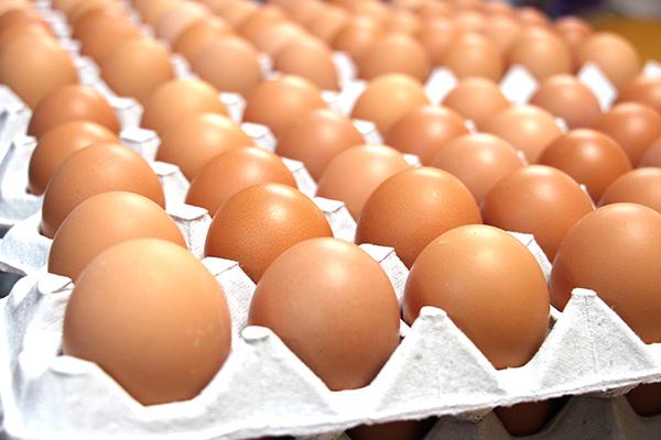 竹内養鶏場の卵
