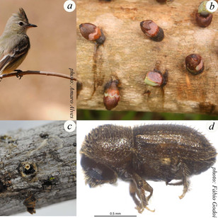 Figure from Fadini et al. 2014-Biotropic