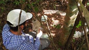 Pesquisa com besouros evidencia efeitos de mudanças climáticas e incêndios na floresta amazônica