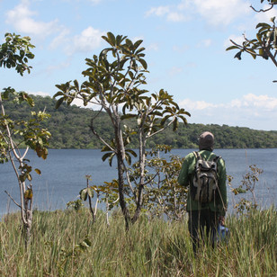 Amazonian savanna