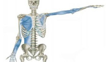 Epicondilite e ombro, qual a sua relação?
