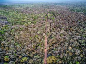 Bolivia: Hjælp til oprindelig folk og truet skovregion fortsætter
