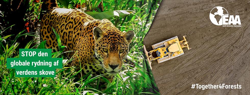 WWF_T4F_WEB_BANNER_JAGUAR_2200x834.png