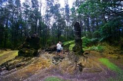 Wild Orchid Tours /Lava Tree Park
