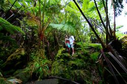 Rainforest in Volcano