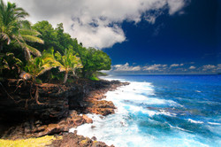Wild Orchid Tours/ tropical Puna