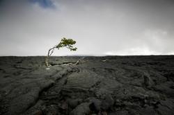 Black lava field
