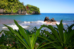 Wild Orchid Tours/ Onomea Bay