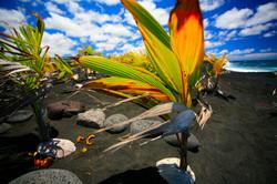 Wild Orchid Tours/Kaimu beach