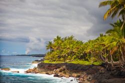 Wild Orchid Tours/tropical Puna