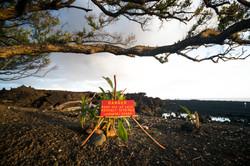 New Lava Beach Pohoiki