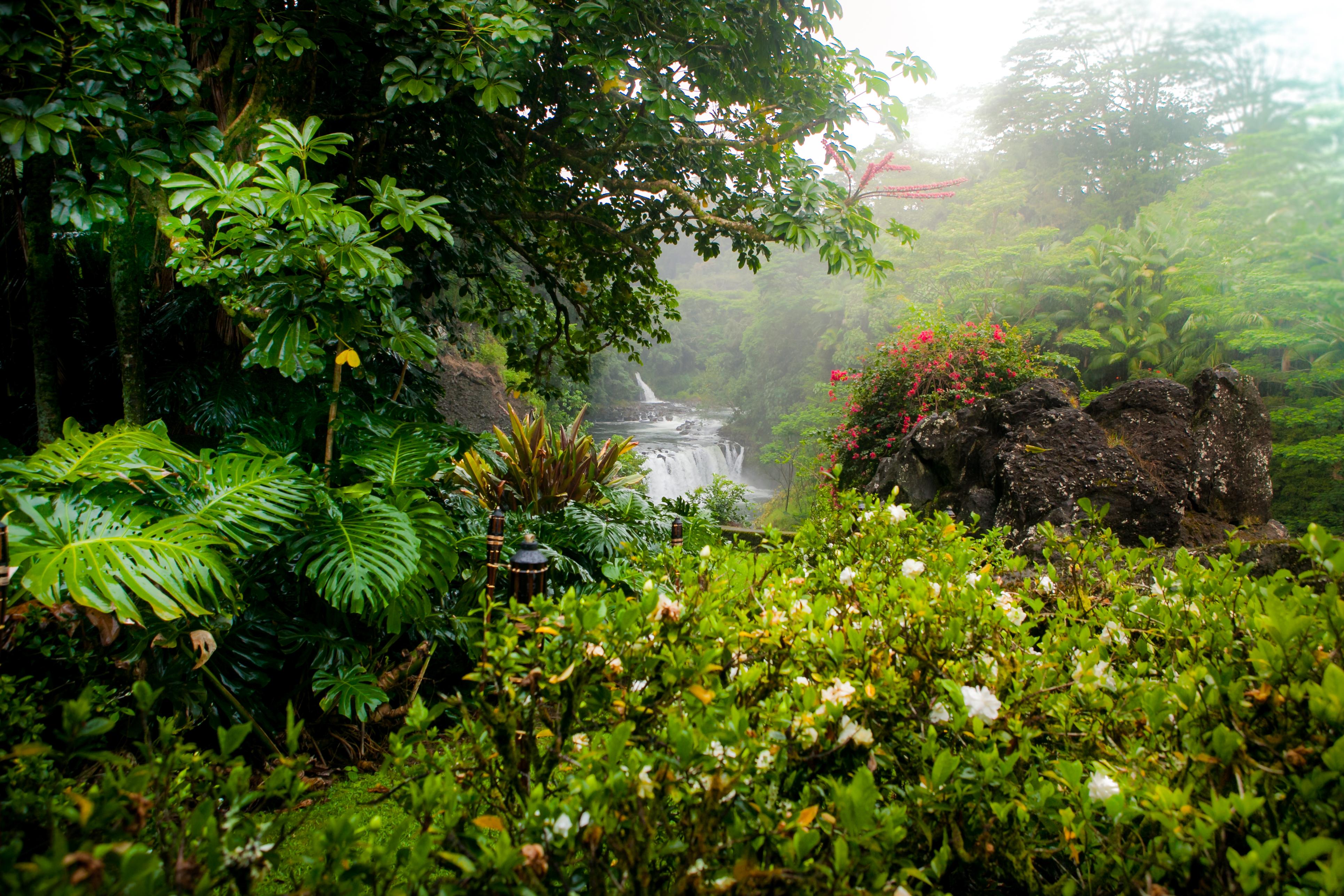 Wild Orchid Tours / Hilo