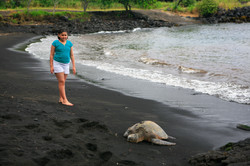 Punalulu beach